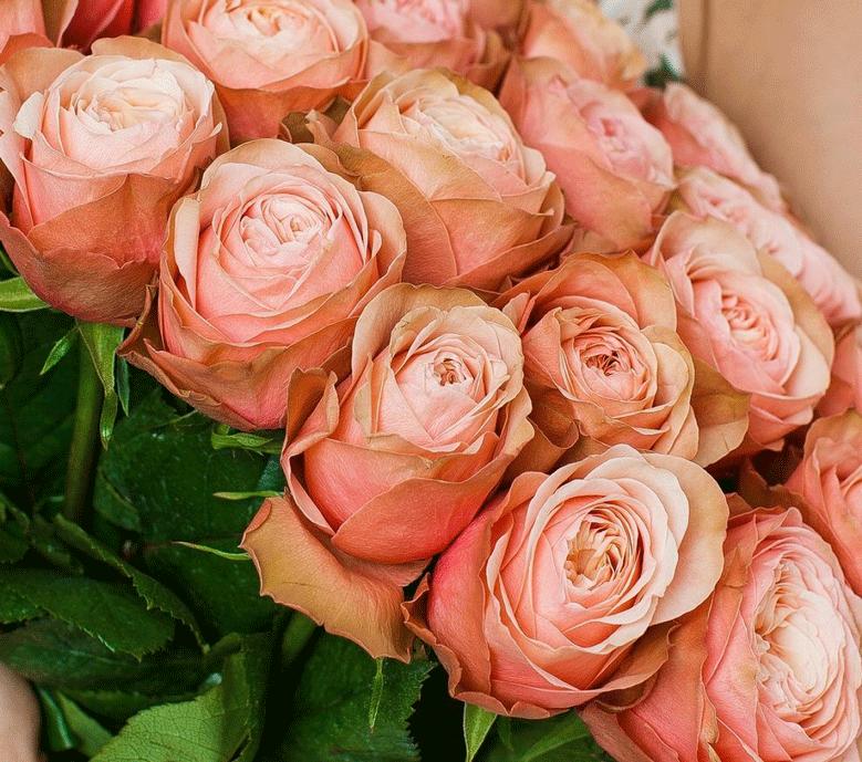 Розы Кахала. Особенности этого красивого сорта