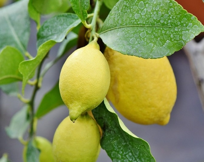 Лимон Кабо